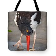 Oystercatcher Eating Clam Tote Bag