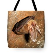 Ozark Big-ear Bat Tote Bag