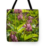 Pacific Bleeding Heart 2  Tote Bag