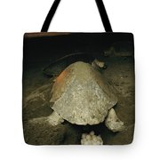 Pacific Or Olive Ridley Turtle Laying Tote Bag