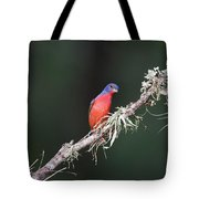 Painted Bunting Curiosity Tote Bag