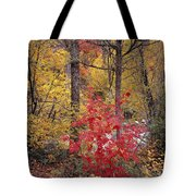 Painted Forest Tote Bag
