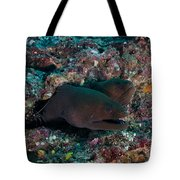 Pair Of Giant Moray Eels In Hole Tote Bag