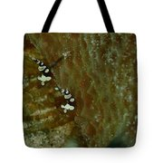 Pair Of Squat Anemone Shrimp Tote Bag