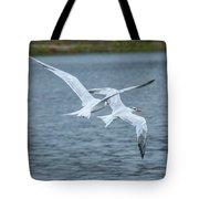 Pair Of Terns Tote Bag