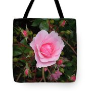 Pale Pink Rose Oregon Coast Tote Bag