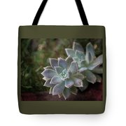 Pale Succulent On Artistic Background, Macro Tote Bag