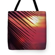 Palm At Sunset Tote Bag