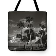Palm Group In Florida Bw Tote Bag