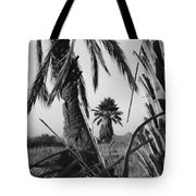 Palm In View Bw Horizontal Tote Bag