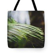 Palm Tree 5 Tote Bag