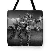 Palm Trees In Black And White At Laguna Beach Tote Bag