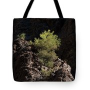 Palo Verde Spotlight-sq Tote Bag
