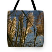 Pampas Grass At Sunset Tote Bag