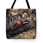Panamic Deer Cowrie, Cypraea Cervinetta Tote Bag