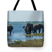 Panorama Of Elephant Herd Drinking From River Tote Bag