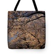 Panorama Of Forest Of Sakura Japanese Flowering Cherry Trees Wit Tote Bag