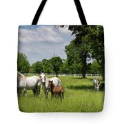 Panorama Of White Lipizzaner Mare Horses With Dark Foals Grazing Tote Bag