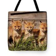 Panoramic Fox Kits Tote Bag