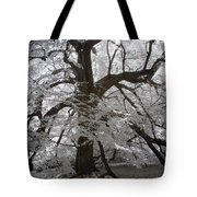 Paper Mulberry In Infrared Tote Bag