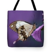 Papilio Dardanus On Violet Flowers Tote Bag