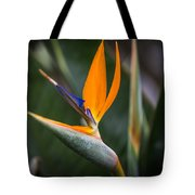 Paradise Song Tote Bag