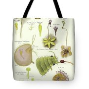 Parasites And Insectivorous Plants Tote Bag