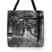 Parkland Trail Tote Bag