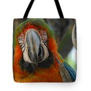 Parroting Information Tote Bag
