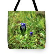 Parry's Mountain Gentian Tote Bag