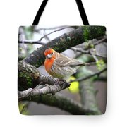 Partial-migrator House Finch Tote Bag