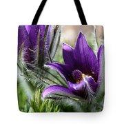 Pasque Flower Duo Tote Bag