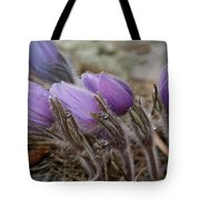 Pasque Flower Watercolor Tote Bag