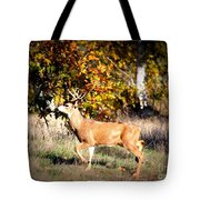 Passing Buck In Autumn Field Tote Bag