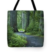 Path Through The Cedars Tote Bag