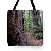 Pathway Through A Redwood Forest On Mt Tamalpais Tote Bag