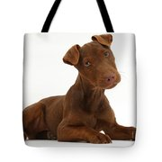 Patterdale Terrier Puppy Tote Bag