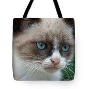 Pauls Little Cat Tote Bag