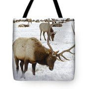 Pawing For Food Tote Bag