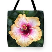 Peach And Pink Tote Bag