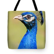 Peacock - 2 Tote Bag