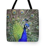 Peacock Colors Tote Bag
