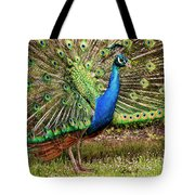 Peacock In Beacon Hill Park Tote Bag