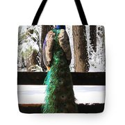 Peacock In The Snow Tote Bag