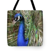 Peacock Mating Season Tote Bag