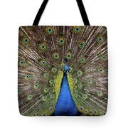 Peacock Plumage Tote Bag