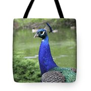 Peacock Portrait #3 Tote Bag