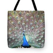 Peacock Show Tote Bag