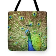 Peacock Showing Off Tote Bag