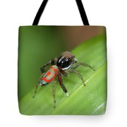 Peacock Spider Tote Bag
